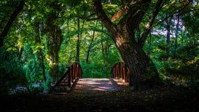 Pont dans la forêt Photos stock