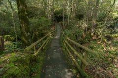 Pont dans la forêt Photo libre de droits
