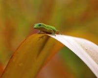 Pont de gecko Images libres de droits