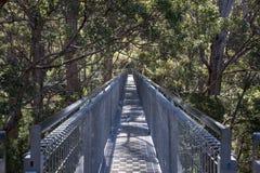 Pont de promenade de dessus d'arbre dans la vallée du Giants Photos stock