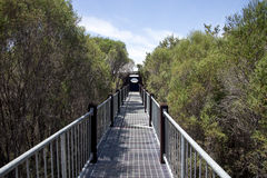 Pont de promenade vers le lac Muir Lookout dans l'Australie occidentale Photographie stock