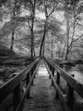 Pont de région boisée image libre de droits