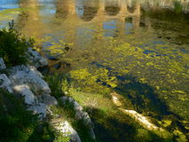 Pont du Gard (Frankrijk) Stock Foto