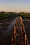 Pont en bambou Images libres de droits