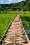 Pont en bambou de la Thaïlande à la ferme de riz Photo stock