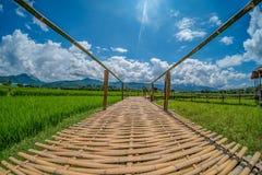 Pont en bambou sur le gisement vert de riz avec le fond de nature et de ciel bleu Photographie stock