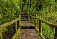 Pont en bois Photos stock