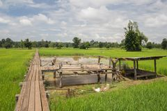 Pont en bois 100 années Image stock