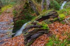 Pont en bois, arbre mort et cascade Image stock