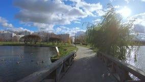 Pont en bois au-dessus d'un étang banque de vidéos