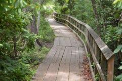 Pont en bois d'itinéraire aménagé pour amateurs de la nature dans la forêt Image libre de droits
