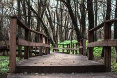 Pont en bois dans la forêt photographie stock