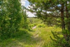 Pont en bois dans la forêt photo libre de droits