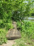 Pont en bois dans le marais Photos stock