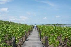 Pont en bois dans le palétuvier la nature d'étude de manière à la lanière de fourche de thung, Thaïlande image stock