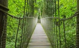 Pont en bois de cabane dans un arbre, en bois et de corde d'Alnwick, jardin d'Alnwick, dans le comté anglais du Northumberland Photo stock
