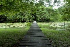 Pont en bois de forêt d'Amazone Image stock