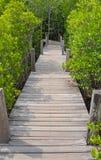 Pont en bois en passage couvert avec le champ de Ceriops Tagal dans des avants de palétuvier Photos stock