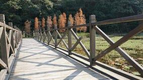 Pont en bois et pin Image stock