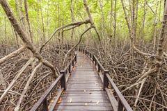 Pont en bois le palétuvier de forêt chez Petchaburi Photo libre de droits
