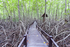 Pont en bois le palétuvier de forêt chez Petchaburi, Thaïlande Photo libre de droits
