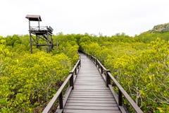 Pont en bois le palétuvier de forêt chez Petchaburi, Thaïlande Image libre de droits