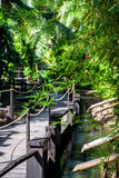 Pont en bois parmi le bambou luxuriant tropical photographie stock