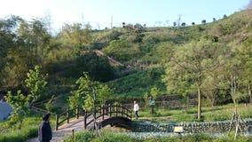 Pont en bois sur la colline Images stock