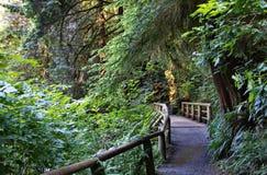 Pont en bois sur un sentier de randonnée photos stock