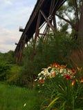 Pont en chemin de fer au-dessus de fleur Image libre de droits