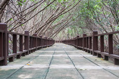 Pont en nature Photos libres de droits
