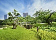 Pont japonais entouré par de beaux pins, érables et cerise image libre de droits