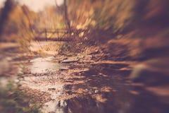 Pont par les bois Images stock