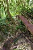 Pont piétonnier au-dessus de la gorge dans une forêt verte photos libres de droits