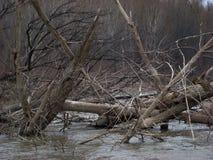 Pont sec d'arbres photographie stock libre de droits