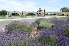 Pont St-Benezet à Avignon sur des Frances Image libre de droits