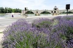 Pont St-Benezet à Avignon sur des Frances Photographie stock libre de droits