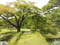 Pont vert dans le jardin de Riykugien, Tokyo Photos libres de droits