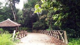 Pont vide à la jungle photographie stock libre de droits