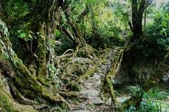 Pont vivant de racines Photos libres de droits
