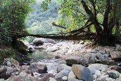 Pont vivant de racines Image stock