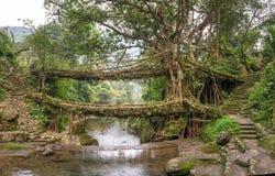 Pont vivant de racines près de village de Nongriat, Cherrapunjee, Meghalaya, Inde image stock