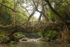 Pont vivant de racines près de village de Riwai, Cherrapunjee, Meghalaya, Inde Image libre de droits