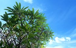 a ponta da árvore não pode riscar o céu imagens de stock royalty free
