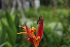 ponta da flor do inseto Imagens de Stock
