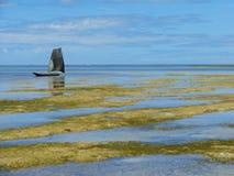 Ponta DE Castelhanos strand, Boipeba, Brazilië Royalty-vrije Stock Fotografie