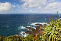 Ponta de Ferraira, Azores, Portugal. View on Ponta de Ferraira with Agave plant in the foreground, Island Sao Miguel, Azores, Portugal Royalty Free Stock Images