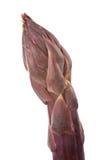 Ponta roxa dos espargos Fotografia de Stock