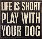 Pontas sobre a vida e o cão Fotos de Stock Royalty Free