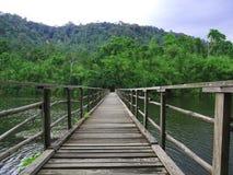 A ponte à floresta Foto de Stock Royalty Free